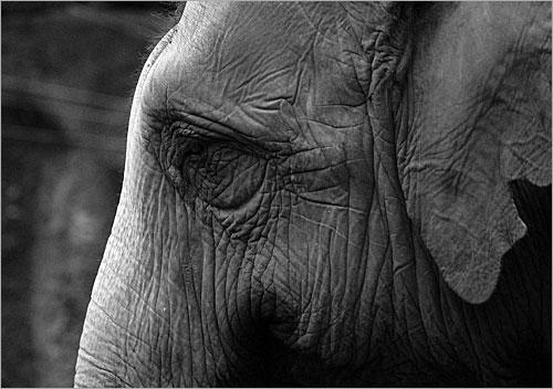 هل الحيوانات تحزن؟